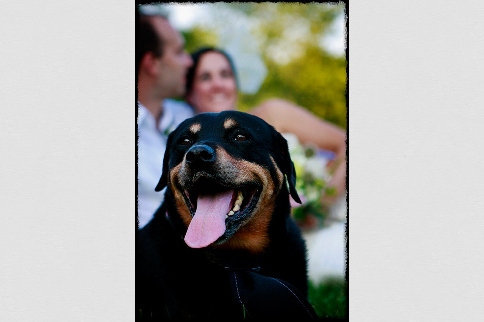 Charlottesville-weddings-photographer-dog